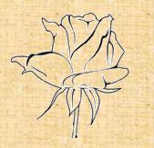 Не обработанная роза на фоне сайта